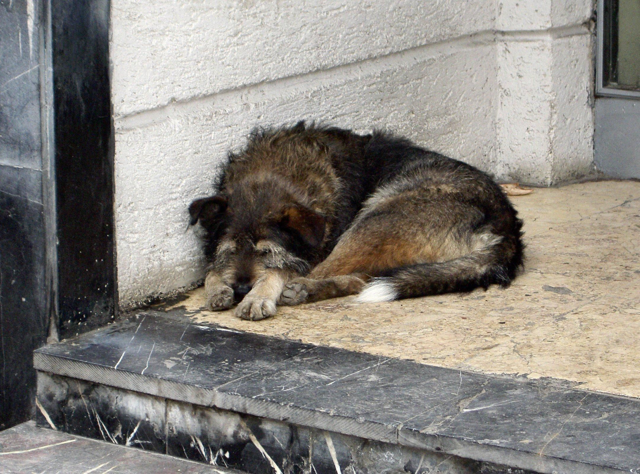 please don't forget about the homeless dogs