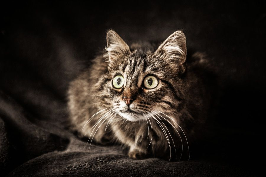 Faire les gros yeux ... by Lucien Vatynan on 500px