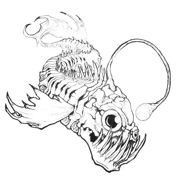 Angler Fish Bone Anatomi Coloring Pages Best Place To Color Fish Coloring Page Angler Fish Drawing Fish Bone
