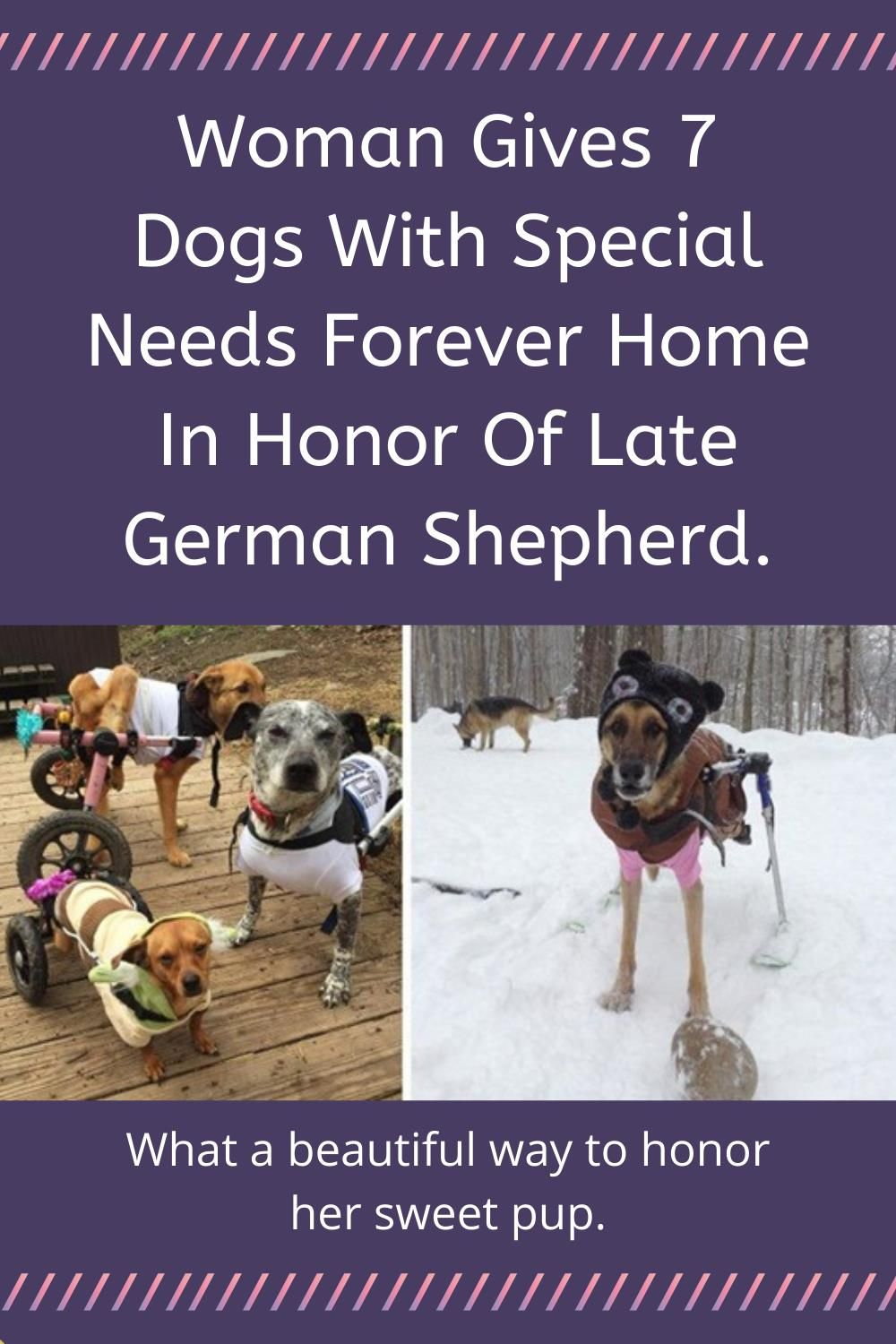Woman Gives 7 Dogs With Special Needs Forever Home In Honor Of Late German Shepherd In 2020 German Shepherd Dogs Animals
