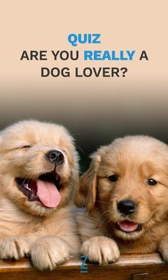 what kind of lover are you test