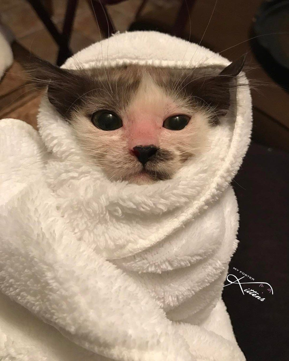 Woman Saves Sick Kitten That Others Gave Up And Helps Her Get Her Beautiful Fluff Back With Updates Sick Kitten Kittens Tiny Kitten