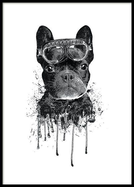 Plakater Med Insekter Og Dyr Plakater Med Sommerfugle Og Guldsmede Desenio Dk Kunst Posters Moderne Posters Bulldog