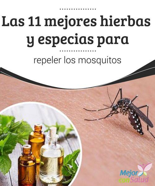 Las 11 Mejores Hierbas Y Especias Para Repeler Los Mosquitos Mejor Con Salud Repelente De Mosquitos Casero Hierbas Repelente De Mosquito
