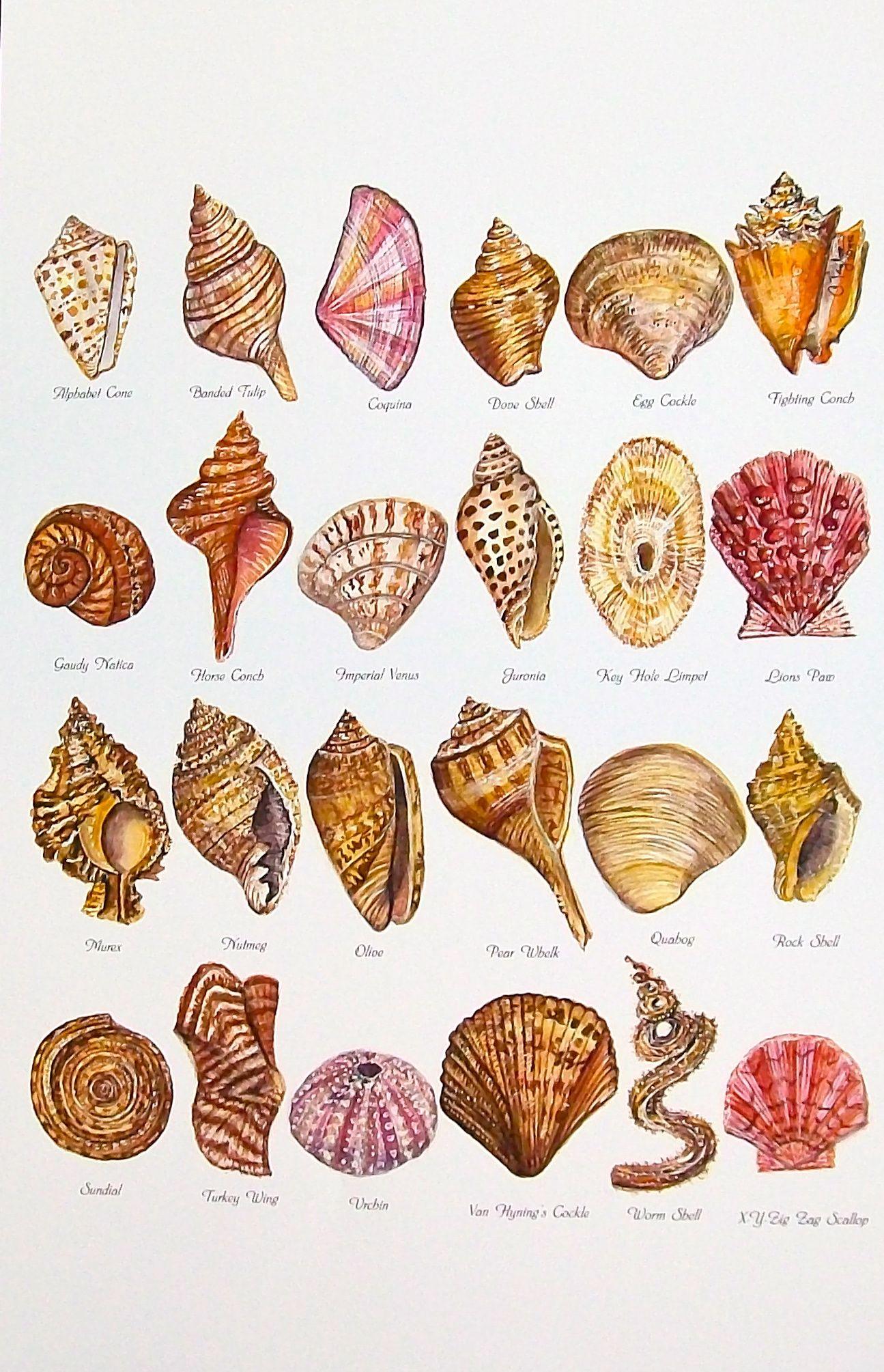 My seashell alphabet watercolorprint of original 11 x