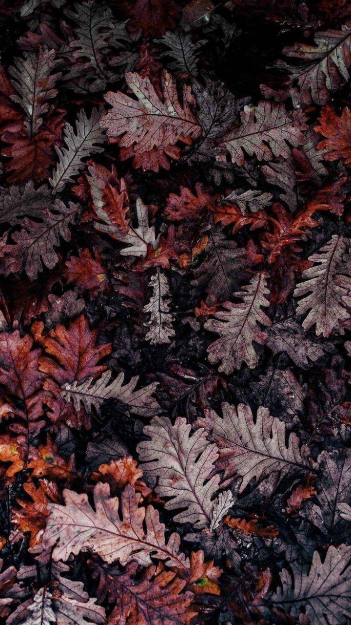 Scrapbook Aesthetic Wallpaper Fall Leavesscrapbooking