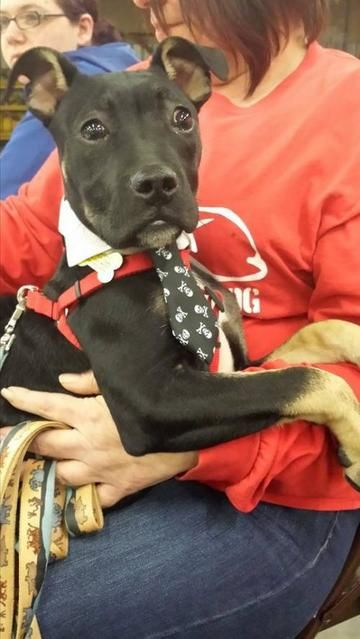 Stevie is available for adoption on View and