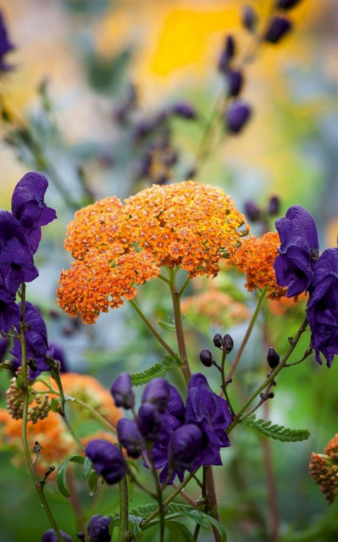 Inspiring 75+ Best Planting Combination Ideas For Beautiful Garden Https://freshouz.com/75-best-planting-comb… | Beautiful Flowers Garden, Plants, Beautiful Gardens