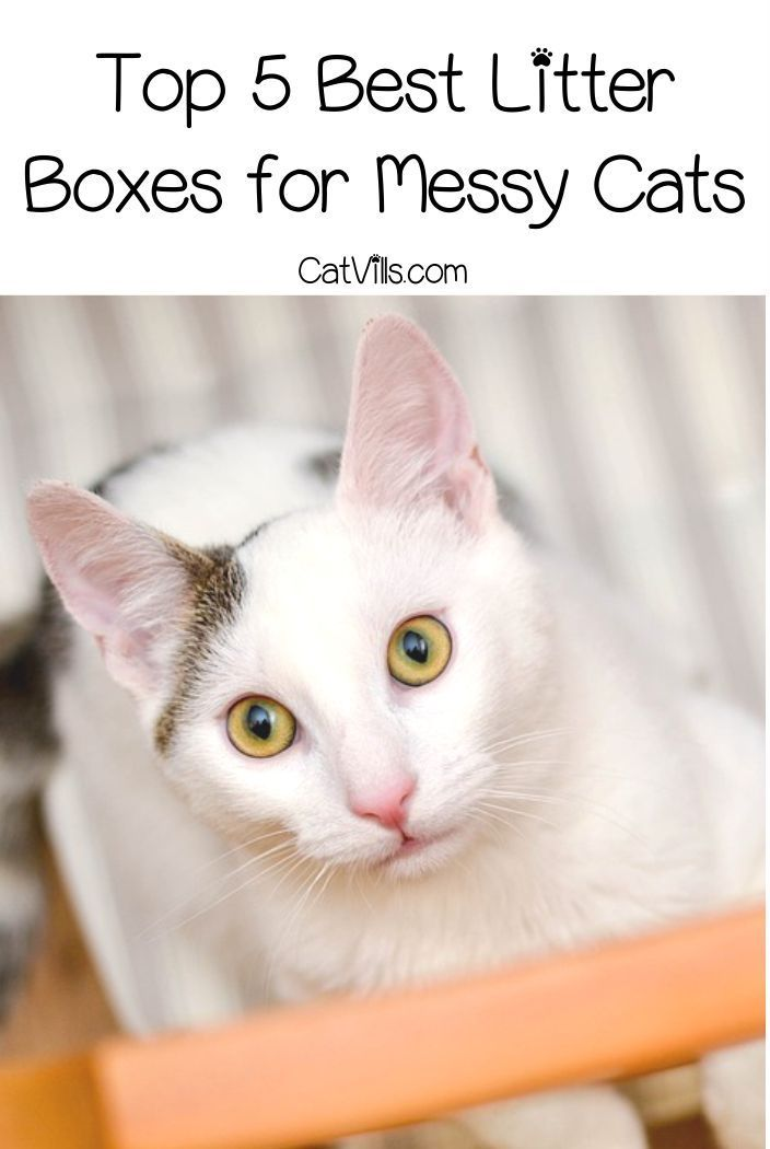 Top 5 Best Litter Boxes for Messy Cats (With images