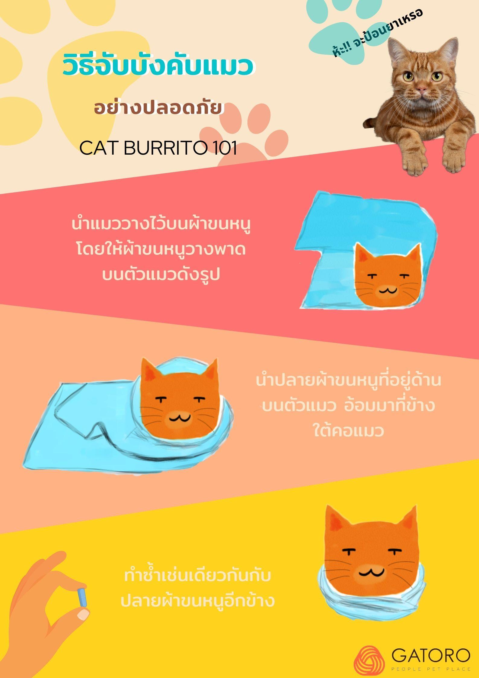 ว ธ บ งค บแมวอย างปลอดภ ย ท งคนและแมว แมว