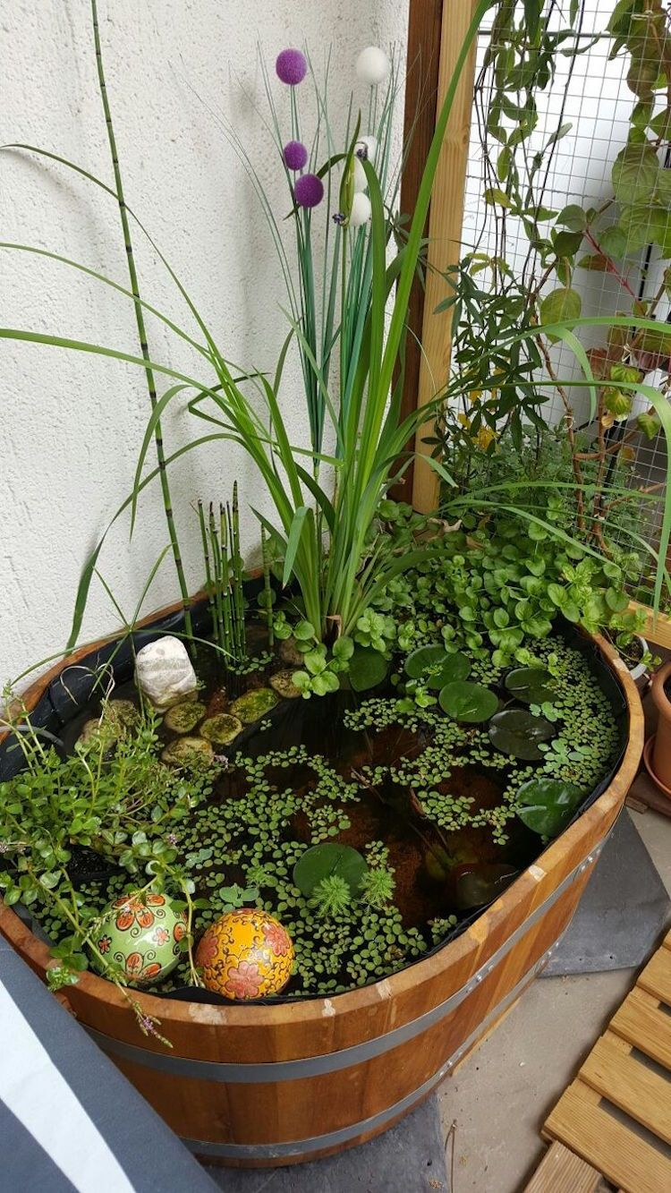 cr er un mini jardin aquatique conception flore et. Black Bedroom Furniture Sets. Home Design Ideas