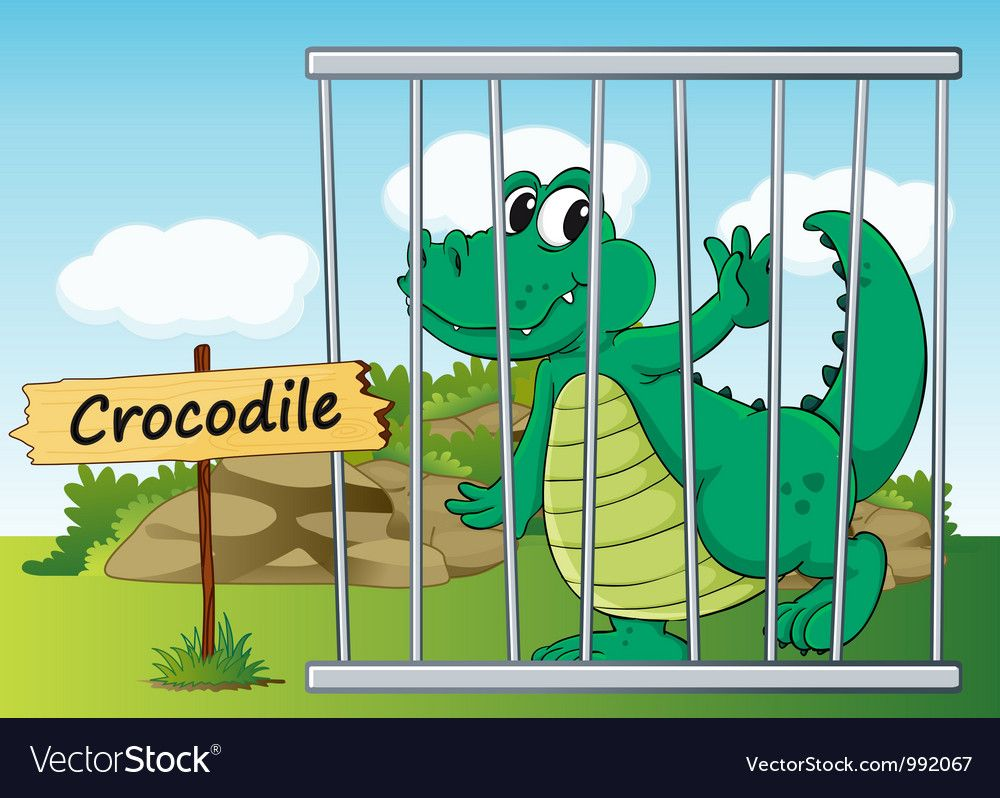 Cartoon Zoo Crocodile Vector Image On Vectorstock In 2020 Jungle Cartoon Zoo Cartoon