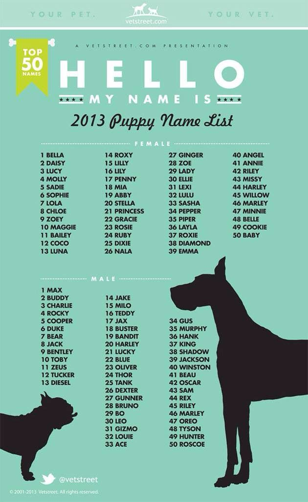 Puppy Name List Puppy Names Popular Dog Names Dog Names