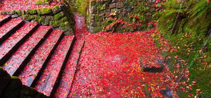 なんとすごい赤の水辺。あの光源氏が紫の上と知り合ったとされる京都岩倉の大雲寺の境内だった(だろう)不動の滝。近くには冷泉天皇内親王晶子の陵もある。実相院から徒歩3分。誰も行かない静寂の中。