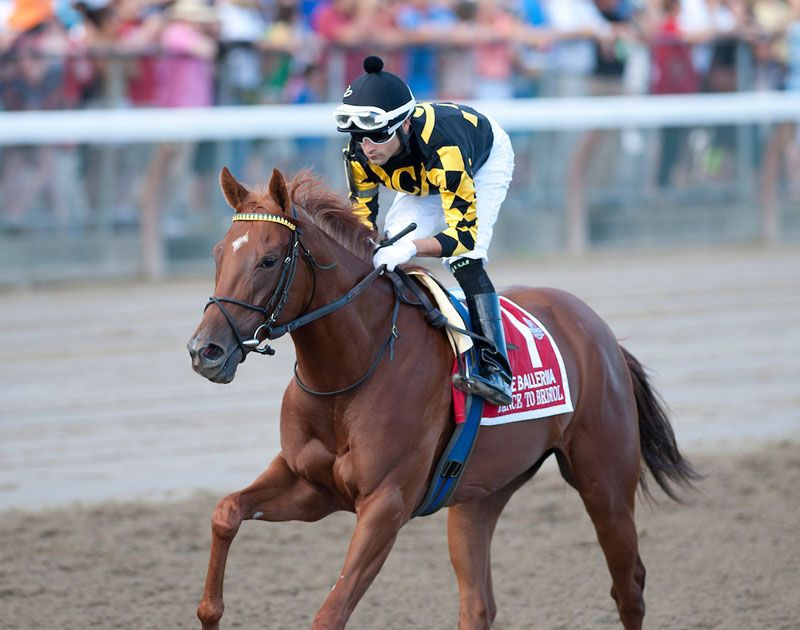 Dance to Bristol (USA) Won seven consecutive starts in 2013, including 5 stakes races.