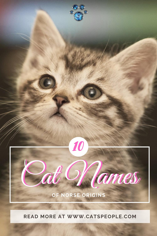 10 Unique Cat Names Of Norse Origins Female Edition in