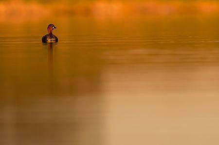 Lonely Photo by Félix Morlán González —