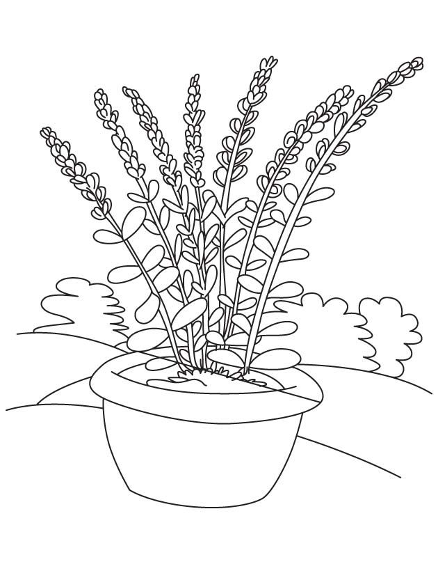 Lavender flower pot coloring page | Download Free Lavender flower ...