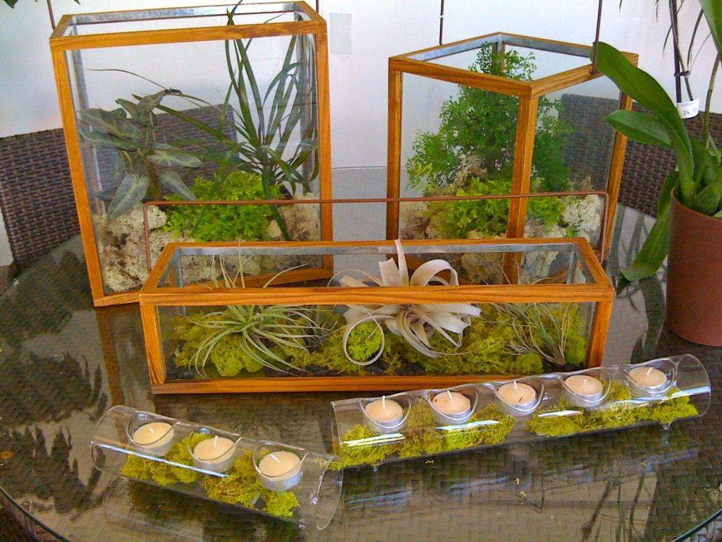 Perfect way to dress up an old aquarium to use as a terrarium
