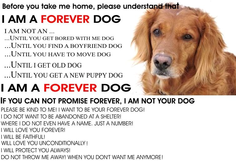 Poster I Am A Forever Dog By Blanca Estrella We Know Why All