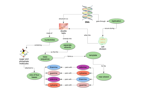 Life Science Concept Map: DNA Structure and Replication | Biology