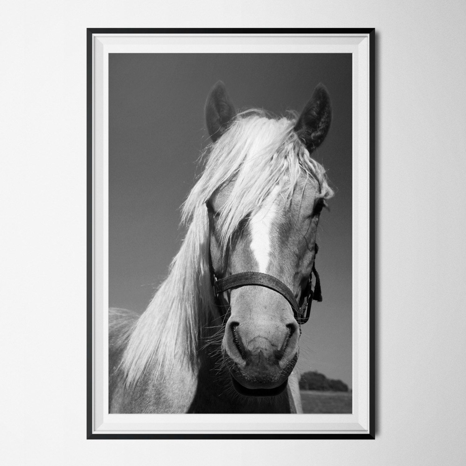 Horse print black white photography animal art giclee print horse poster fine art print 8x10 11x14 16x20 18x24 24x36 poster by olaholahola on