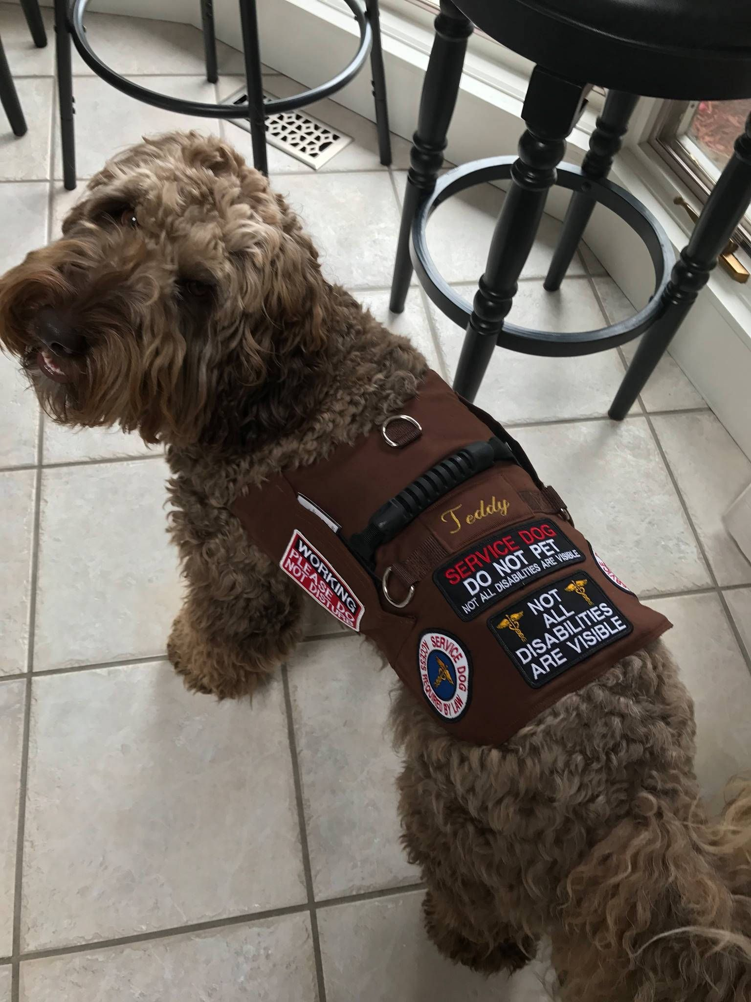 SERVICE DOG Iron On Patch Dogs Pets