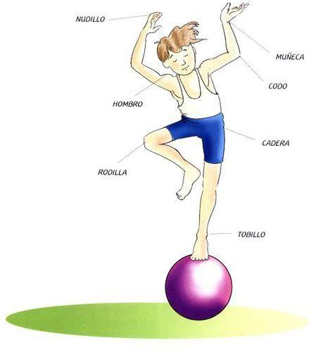 El Cuerpo Humano Las Articulaciones Material De Aprendizaje Articulaciones Del Cuerpo Humano Cuerpo Humano Sistema Muscular Para Ninos