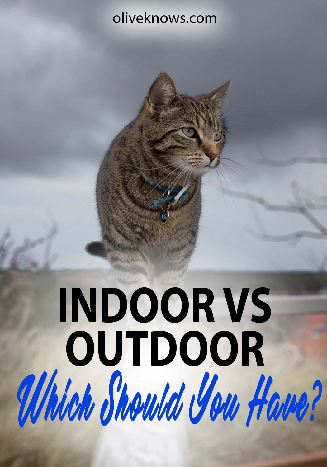 Indoor Cats Vs Outdoor Cats Which Should You Have Oliveknows Indoor Cat Outdoor Cats Pet Care Dogs