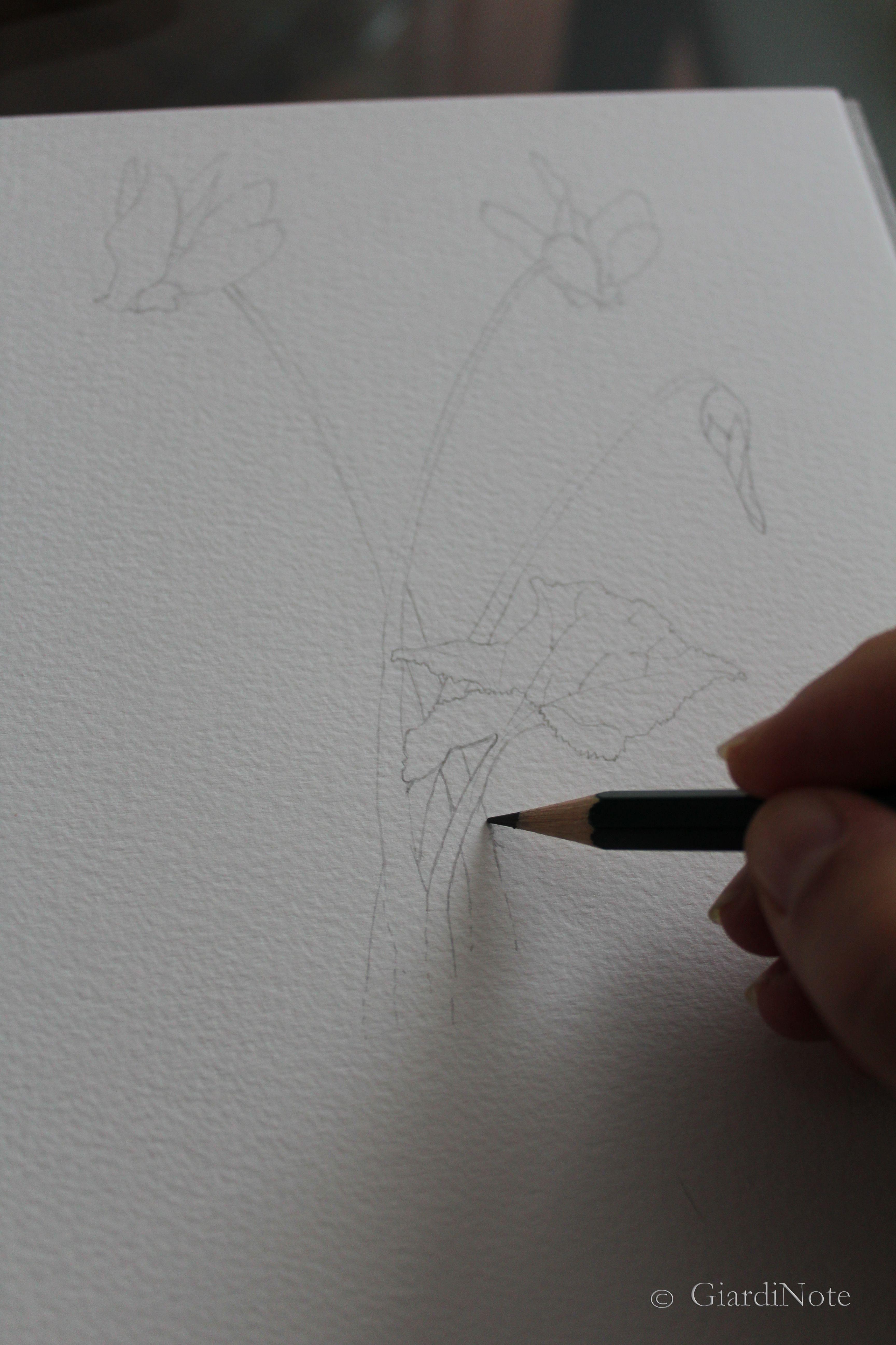 acquerello_botanico_disegno1