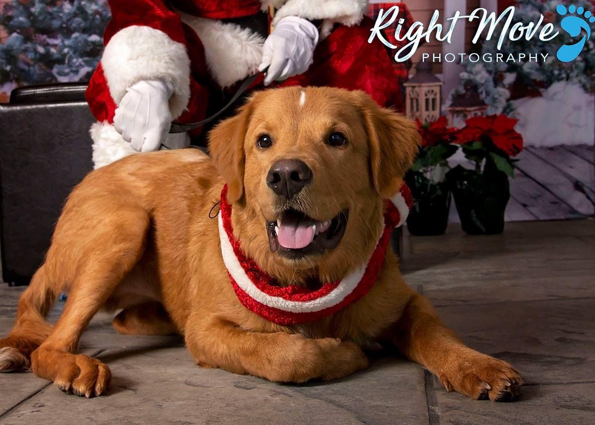 Pin By Katie Jones On The Coolest Golden Retriever Rescue Pet Adoption Labrador Retriever