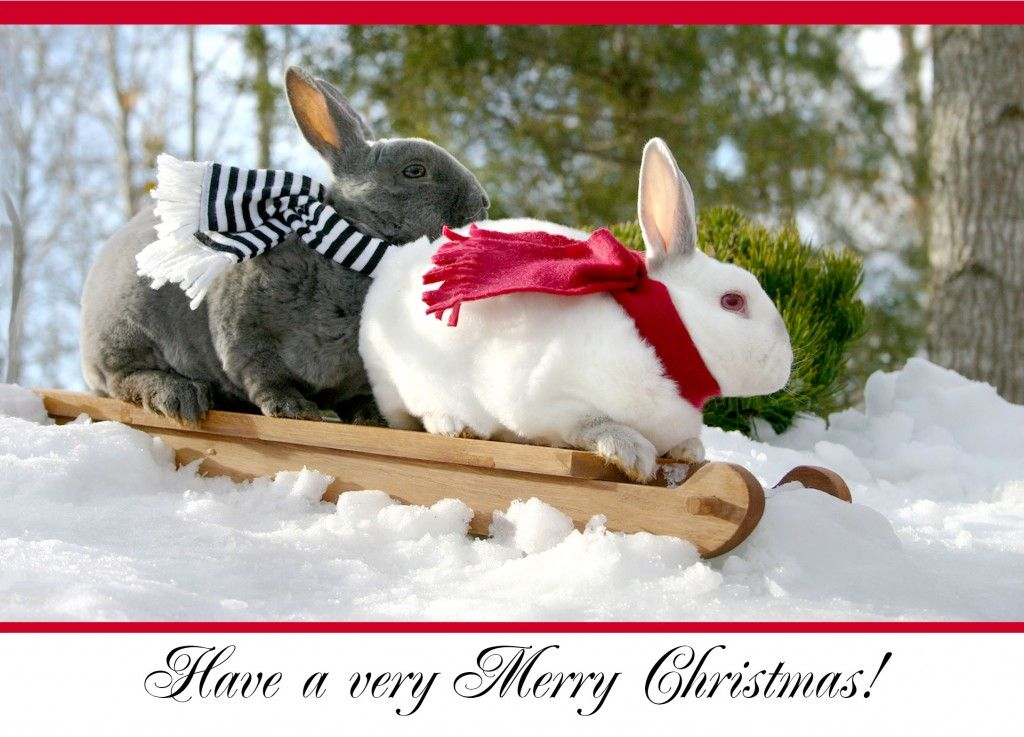 Christmas Cards Bunny Buddies Sledding Rabbit Pictures Christmas Animals Christmas Bunny