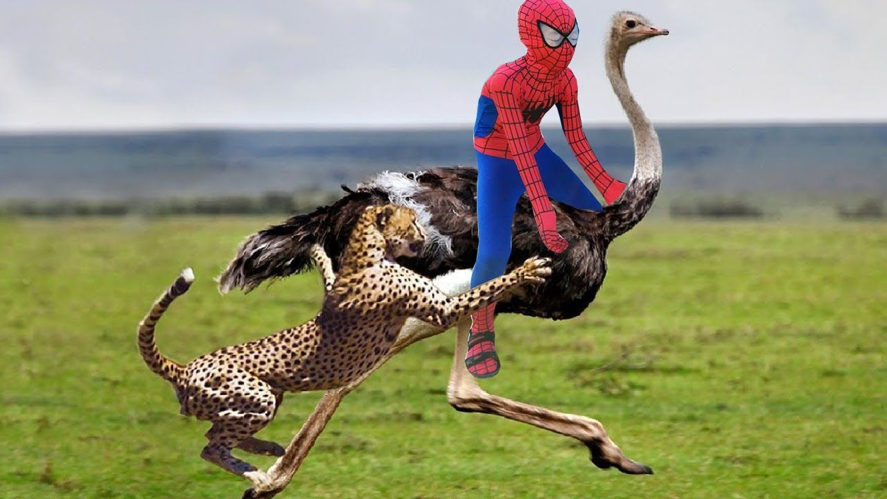Baby Learn Animal With Baby Ostrich Dance in Magic Class! Spiderman Ride...