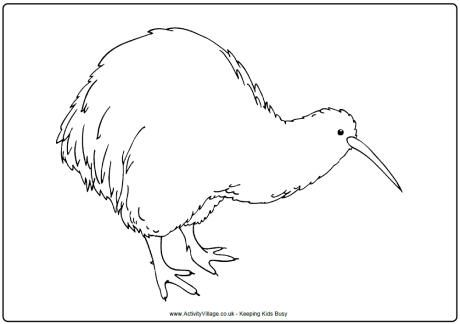 Kiwi Colouring Page Maori Proyectos