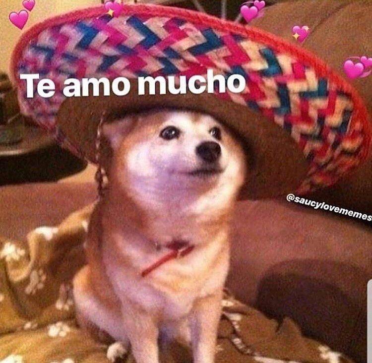 Uwu Intensifies In Spanish Lovememe Luv Lovememes Wholesome Wholesomes Cute Love Memes Cute Memes Funny Spanish Memes