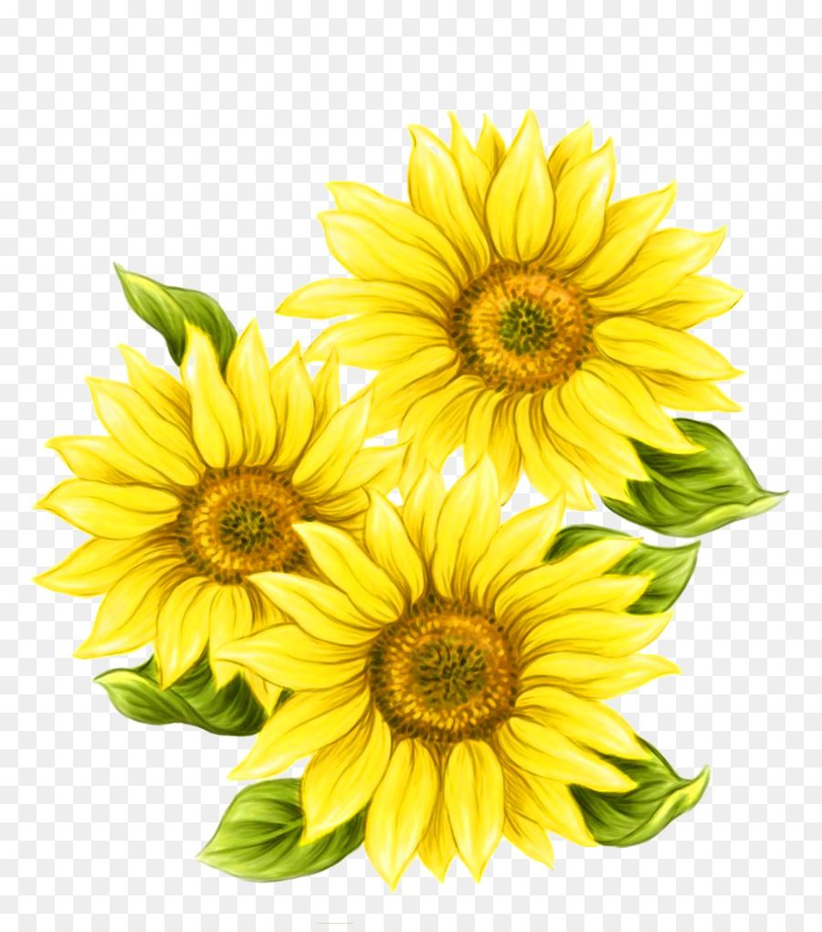 Watercolor Painting Common Sunflower Yellow Hand Painted Sunflower Decorative Pattern Unlimited Downl Sunflower Drawing Watercolor Sunflower Flower Drawing