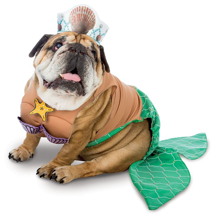 Dog In Zelda Mermaid Costume Halloween Party Event Costumes