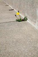 Get rid of sidewalk weeds with the help of baking soda or vinegar.
