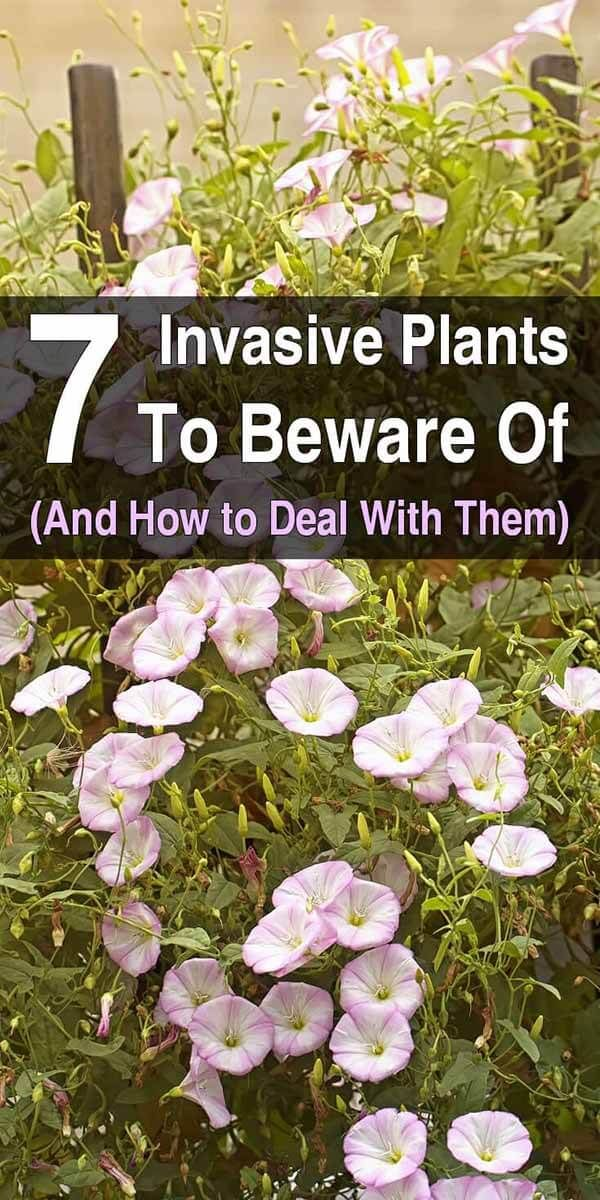 7 Invasive Plants to Beware Of (and How to Deal With Them