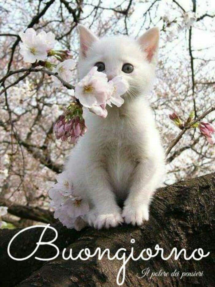 Buongiorno Gatto Animali Gatti Gatti Divertenti E Gatti