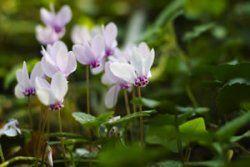 Zimmerpflanzen Für Dunkle Standorte zimmerpflanzen für dunkle standorte und kühle räume plants