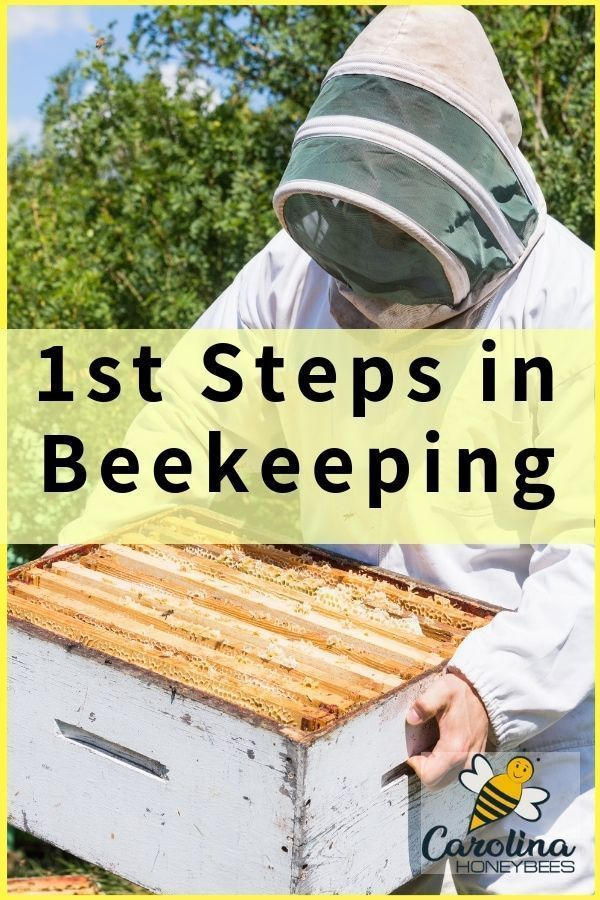 Starting Beekeeping- Are You Ready For A Hive?   Bee ...