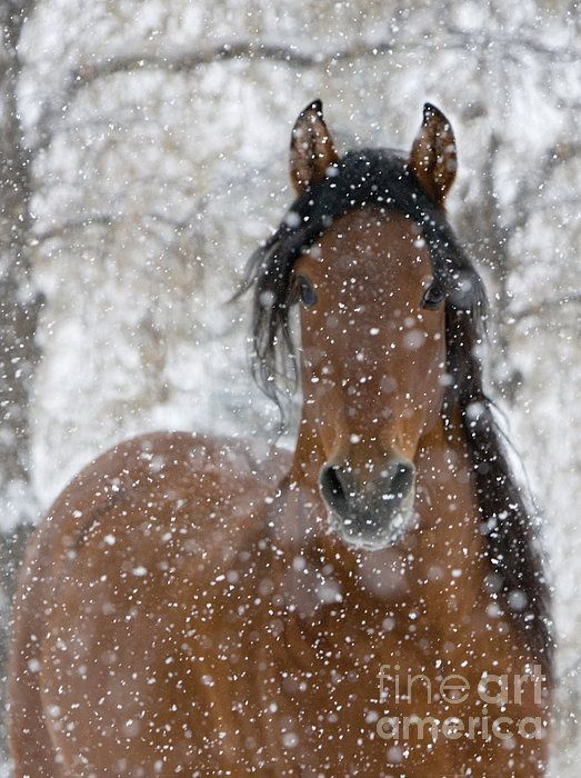 Congratulations to Carol Walker! Here photo Snow Stallion has won 3rd place in the Holiday Joy Contest on  Fine Art America! #winner, #horse, #contest