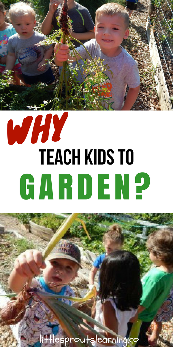 6da356c881fa1a9d4a8c2a128b204d62 - Why Gardening Should Be Taught In Schools
