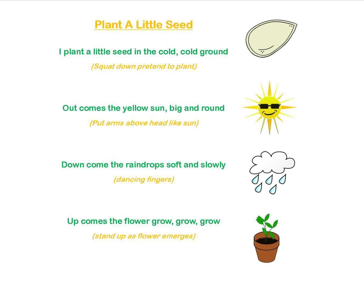 Seeds Amp Plants Storytime Preschool Craft Toddler Craft