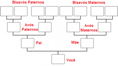 Como Construir A Arvore Genealogica Para O Processo De Cidadania