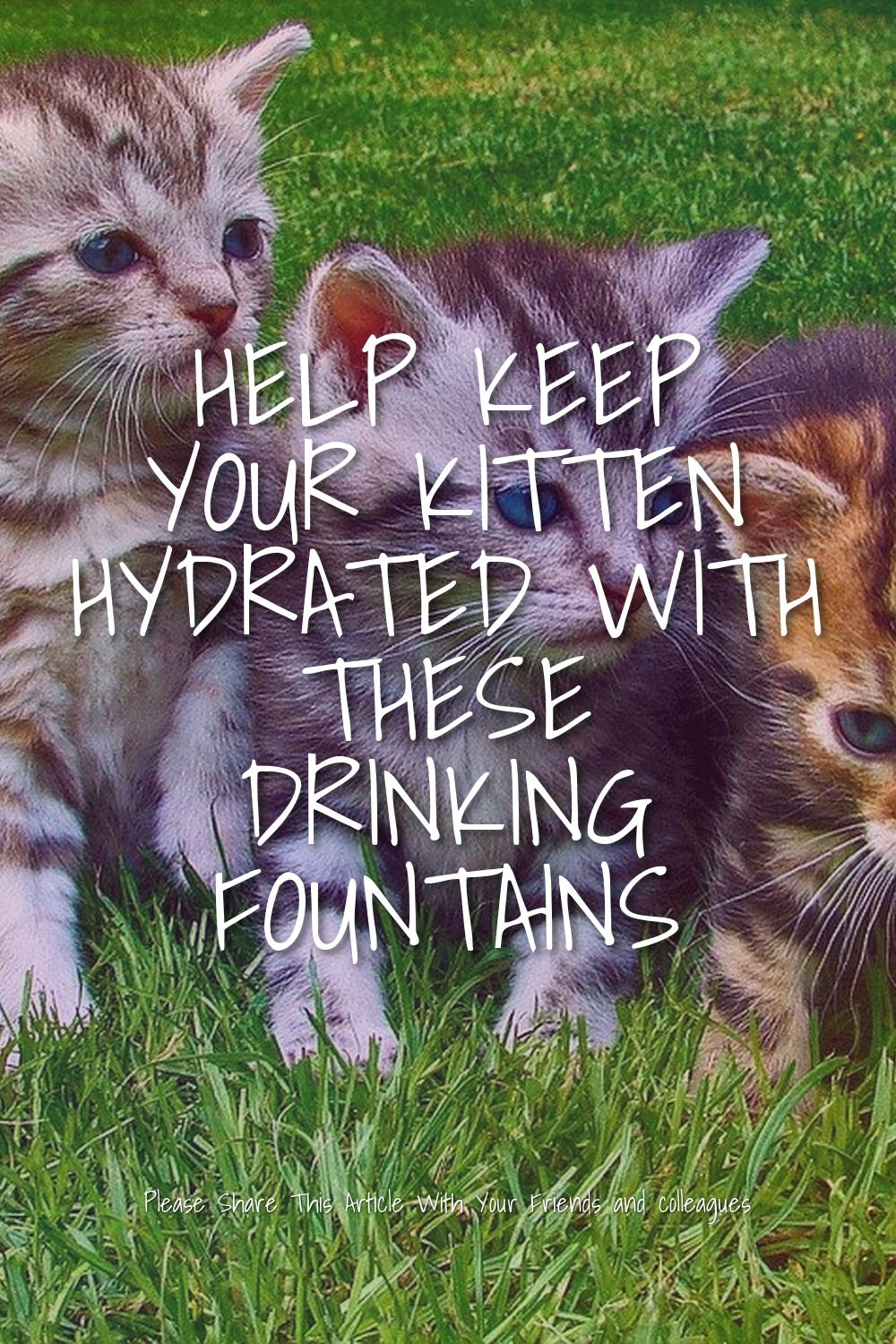 Help Keep Your Kitten Hydrated With These Drinking Fountains In 2020 Drinking Water Fountain Pet Water Fountain Fountains