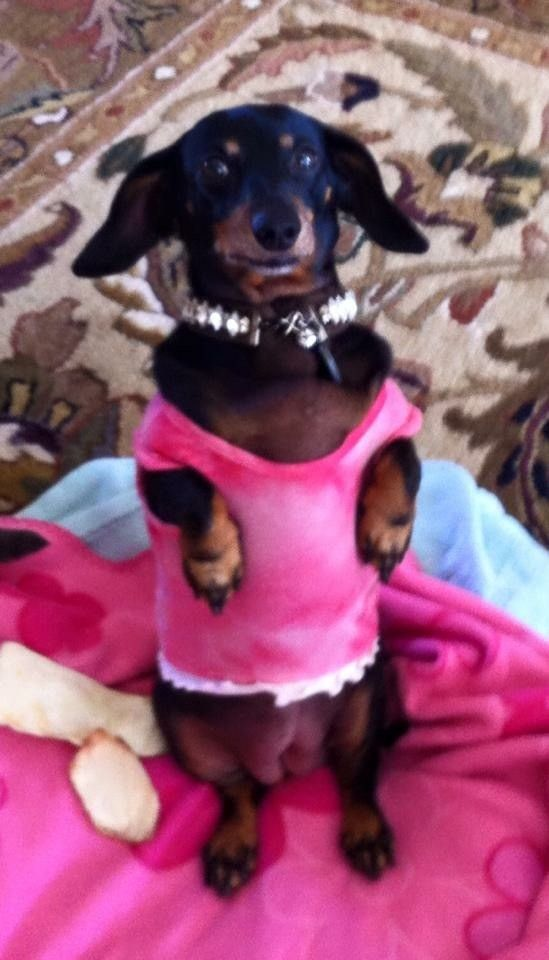Ok I M Dressed Now Can I Please Have Another Cookie Pet Store Food Animals Pets