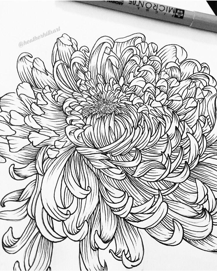 Chrysanthemum Drawings Tattoos