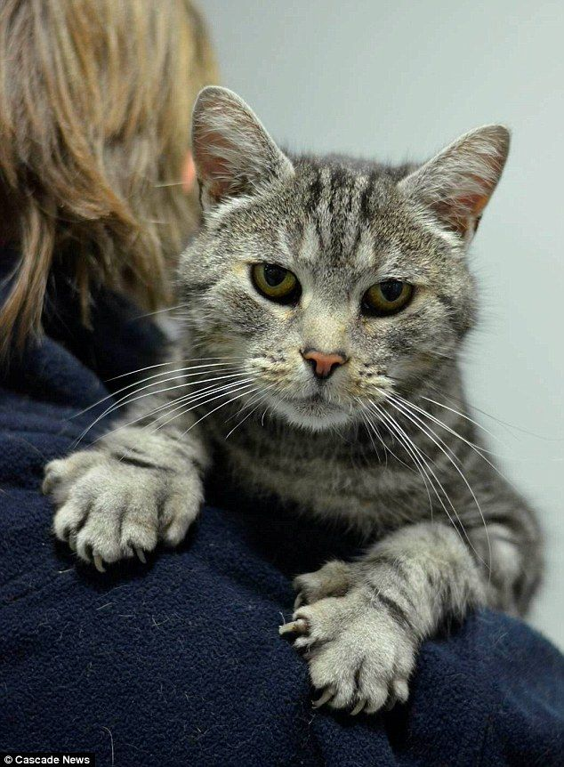 The cat with five toes Pet with extra digits is returned